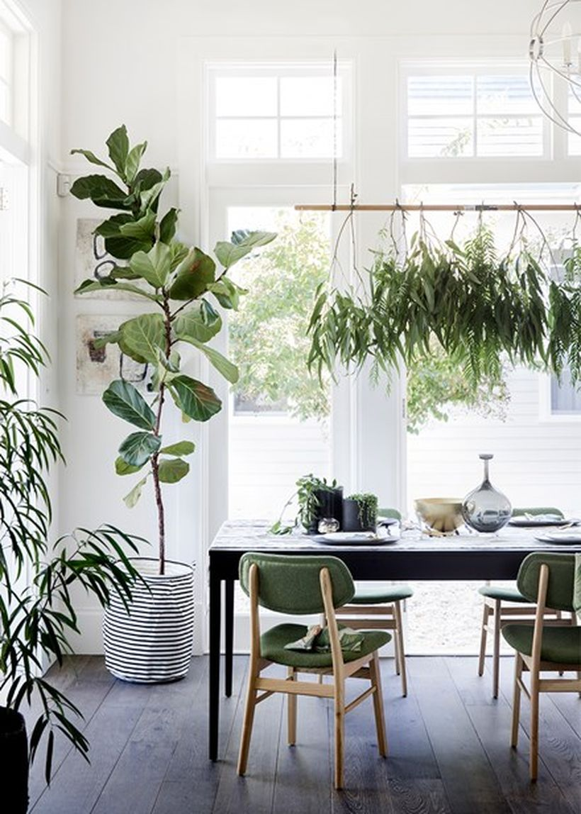 Best Indoor Plants Decor For Air Purify Apartment And Home 3 Papooa